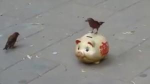 路上の小鳥さんに聞きました!趣味はなんですか?→貯金です