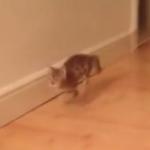 ボーリングの玉のように床を滑っていき喜ぶ子猫!もっかいやって!もっかいやって!