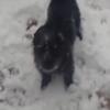 犬は喜び庭駈け回る!はじめての雪に大興奮の犬!
