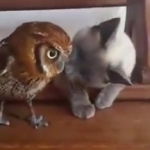 仲良しな二人!じゃれるネコとフクロウが愛らしい!
