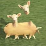可愛い羊の動画かと思って再生したら、羊が増殖するキモイCG作品だった!