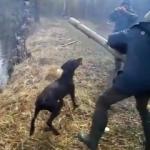 投げられた棒切れは必ず拾ってくる犬!例えどんなに大きい木の枝でも!