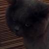 散発の結果がヒドイ有様だと、猫でも落ち込むんだなーって動画