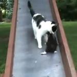 母性本能くすぐられ!滑り台を滑っていく子猫を救出する母親猫!