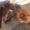 リスの赤ちゃんにCome here!と言ったら猫が2匹もいるのに寄ってきたよ!