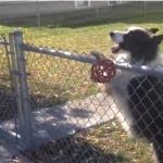 犬の策略!?柵の外にあるボールを返してあげたらエンドレスな遊びに付き合わされた!