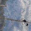 木登りクマさんが1匹。木登りクマさんが2匹。登るの早くて驚いた!