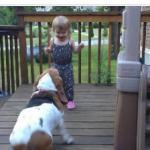 ほのぼのダンス!愛犬のバセットハウンドと遊びながら可愛い高速ステップを踏む女の子!