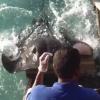 モルディブの極上な海!エサをねだるアカエイが大接近!魚類とは思えないほど懐っこい!
