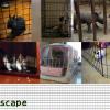 え、出れちゃうの?スキマを抜けて脱出する動物たち!7種類の脱出ミッションを遂行せよ!(GIFアニメあり)