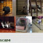 え、出れちゃうの?スキマを抜けて脱出する動物たちのミッション7種類!