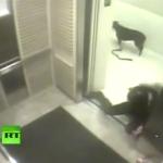 犬のエレベーター事故。犬を愛する全ての人に見ておいてもらいたい!