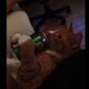 自らビールを飲む猫が可愛い!だけど本当は飲ませたらダメ!我輩は猫であるを知ってるでしょ!