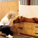 まるでマキバオー!?イギリスで一番小さな馬が本当に小さかった!