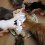 愛猫6匹に可愛いイタズラ!見えないマグロをあげてみた!