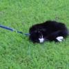 猫の散歩ってこうなんだ!?自分で歩くより楽なのニャ!