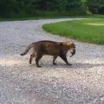 リスを逃がしてあげた猫!そのリスから連続攻撃を受ける!