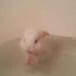 なごみ動画!生後2週間のウサギが生まれて初めてのお風呂タイム!