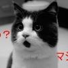 【珍しい猫の画像】どんな時も驚いている表情のニャンコ