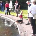 ご主人様に近づくな!ロボットのワニから家族を守る犬!ヨーキー可愛いです!