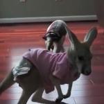 カンガルーの赤ちゃんを脅かすアリクイの威嚇ポーズが面白くて悶えちゃいそう!