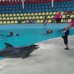 イルカと少年がボールで遊び続ける面白動画