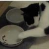 ゴハンの食べ方が丁寧すぎる猫