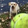 何度も枯葉の山に飛び込む犬!ボール探しが面白いんだってさ!
