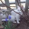 猫はもっと怒ってもいいと思う!ネコのお昼寝を徹底的に邪魔するアヒルが容赦ない!
