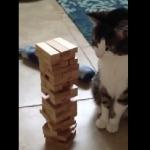 猫で学ぶジェンガのルール!世界で2番目に売れているゲームなんだってさ!
