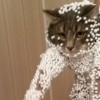 猫大好き!パっと見れちゃう面白ネコ画像!(7枚)