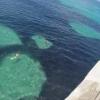 黒いの全部イワシ!スクリップス桟橋で大発生したアンチョビ魚群が凄い!