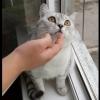 猫には何かが見えている!何をされても動かずに一点を凝視するネコちゃん!