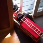 【くだらない(笑)】バーベキューから出火!火事だーワンワン消防車の出動だ!パート2
