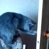 ご主人様の命令でドアを閉める猫!(扉を閉めるネコのGIFを3つ)