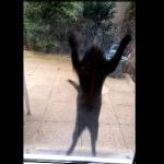 飼い主の気を引く猫!