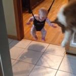 赤ちゃんの影と戦う犬!ジョリージャンパーで宙吊りになっている子供の影に怯えるワンコ!