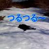 凍った雪道を滑り降りる犬!氷の坂道を何回でも寝転んで滑っていくワンコ!