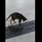 ネコがネズミを狩る瞬間