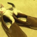 靴に横たわり、眠りに落ちそうになる子猫。