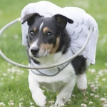 目が見えない犬、盲目の犬の為の新発明!これ広まると良いと思う。