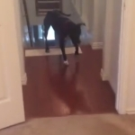 キッチンのドアが怖い犬!その恐怖を愉快な方法で克服!