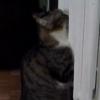 オイルラジエターヒーターで暖まる猫