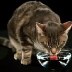 独創的な水の飲み方をする猫達のGIFアニメ