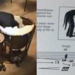楽譜どおり!演奏者がティンパニに頭を突っ込む「ティンパニとオーケストラのための協奏曲」!