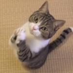 お願いする猫!「おやつちょうだい」と両手を合わせて拝むようにお願いするネコ!