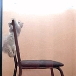 子猫が椅子から落ち・・・落ちてなかった!
