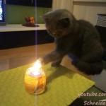 ロウソクの炎を味わう猫!キャンドルの火って美味しいの?