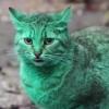 エメラルドグリーンの猫あらわる!誰の仕業だ→緑の塗料の上で寝てただけ!