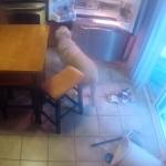 留守番中の犬を隠しカメラで撮影!冷蔵庫を開けて食べ物を漁ったり盗んだりしてた!